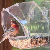 window bird feeder suction cup