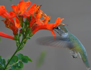 Attract more backyard birds with these hummingbird flowers