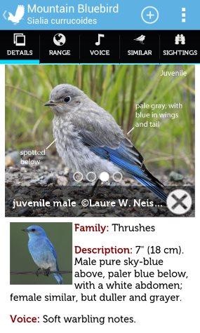 audubon birding app is free