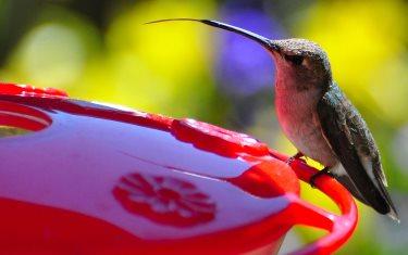 Captivating Best Hummingbird Feeders