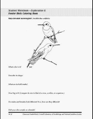 It Is Bird Coloring Pages