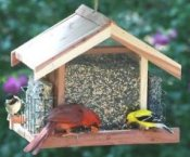 best bird feeders