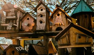 free bird house designs for all types of birds