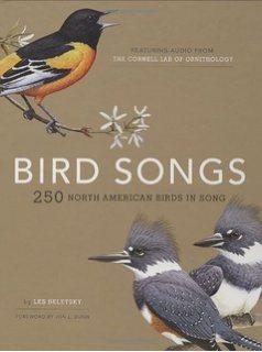 bird song identification audio guide