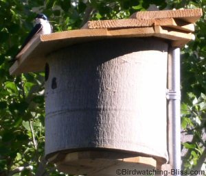 How to Build a Bird House from a Tree Log