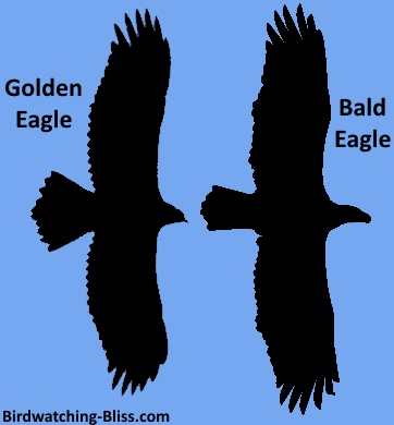 compare eagle silhouette for identification