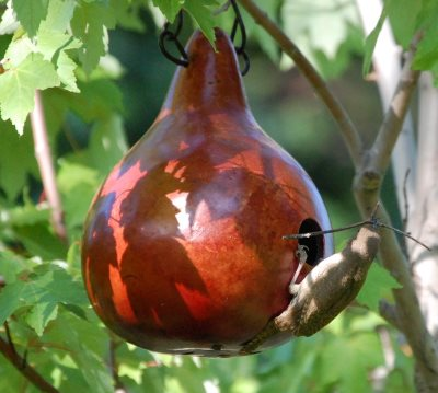 gourd birdhouses for Purple Martins, wrens, bluebirds, cavity nesters