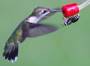 how to keep bees and wasps out of hummingbird feeder