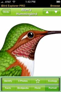 one of the best birding apps is iBird