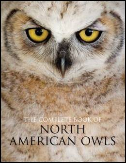Owl Pictures and Owl Info