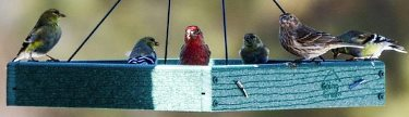 platform bird feeders attract a variety of birds