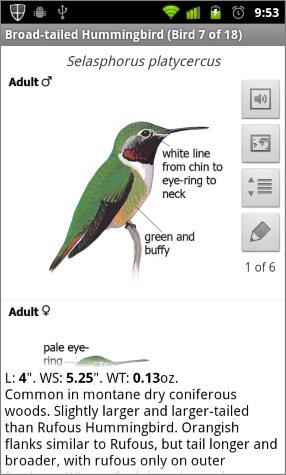 sibley birding app