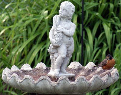 tips when purchasing stone bird baths