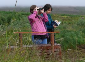 using birding binoculars on a trip with a field guide