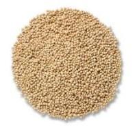 white proso millet bird seed