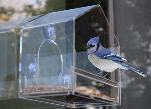 best window bird feeder that is easy to fill and clean