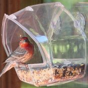 window bird feeder suction cup