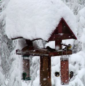 winter bird feeding requires seeds with higher caloric value
