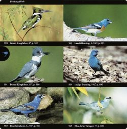 Audubon bird field guide
