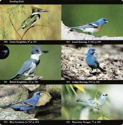 Audubon bird field guide