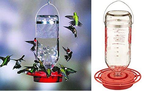 best hummingbird feeder glass bottle