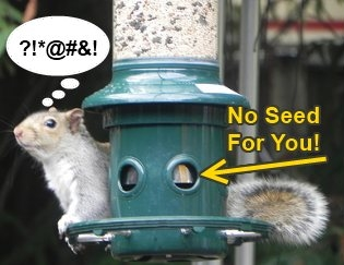 best squirrel proof bird feeder buster plus