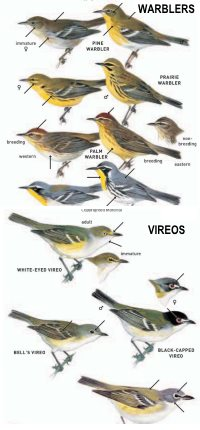 learn the bird families