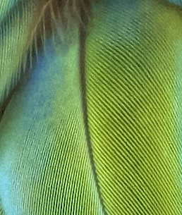 bird feather closeup unique bird characteristic