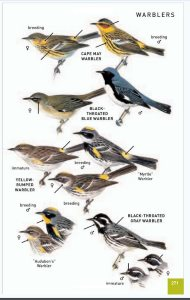 review of the best bird field guides