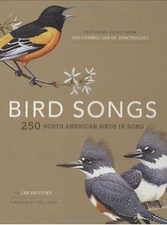 bird song identification audio guide