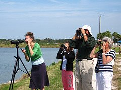 bird watching tips for beginner to advanced birders
