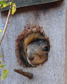 make sure to not use squirrel guards for your birdhouse and no perches