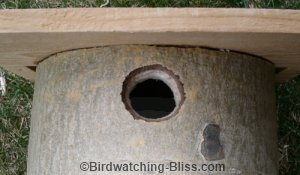 birdhouse hole size