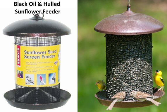 black oil sunflower seed bird feeder whole and hulled
