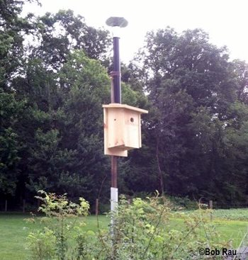 bluebird house located in open meadow