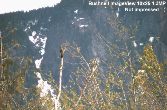 bushnell binocular camera