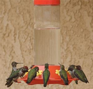 clear homemade hummingbird food will still attract birds