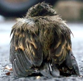 Found an Injured Bird? Here's What To Do