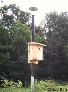 bluebird house plans design for hot weather