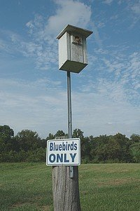 Free Bluebird House Plans - Multiple Designs