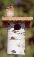 gilbertson bluebird house plans