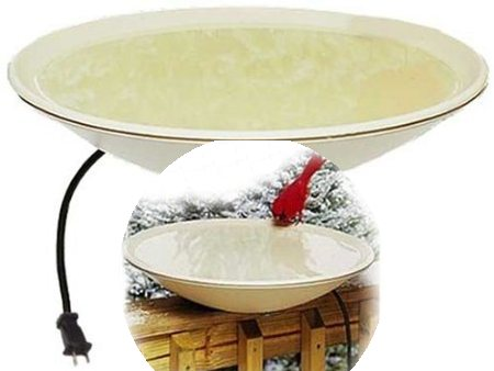 A Heated Bird Bath Provides Water For Birds During Winter