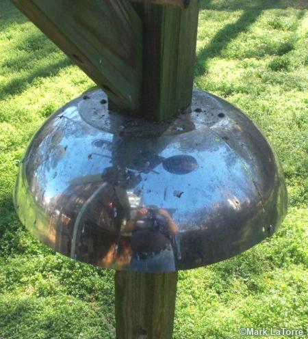 homemade squirrel baffle or guard