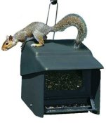 homestead stop a squirrel proof bird feeder