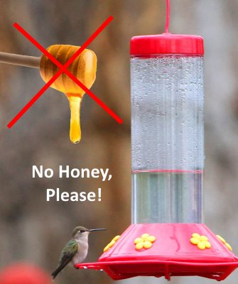 don't use honey in your hummingbird food recipe