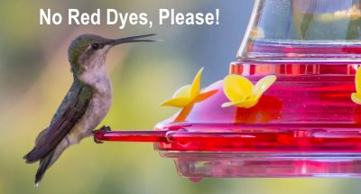 make your hummingbird food recipe without using red dye