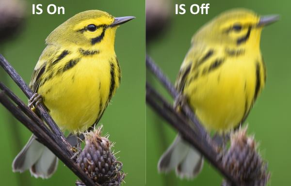image stabilized binoculars for birding comparison turned on and off of a prairie warbler