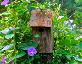 making bird houses here is an old one in a pretty wildflower garden