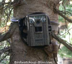 mini moultire game camera 880 with python cable