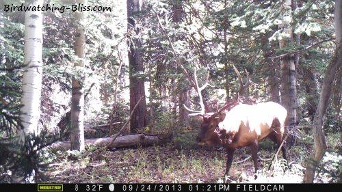 moultrie trail camera big elk
